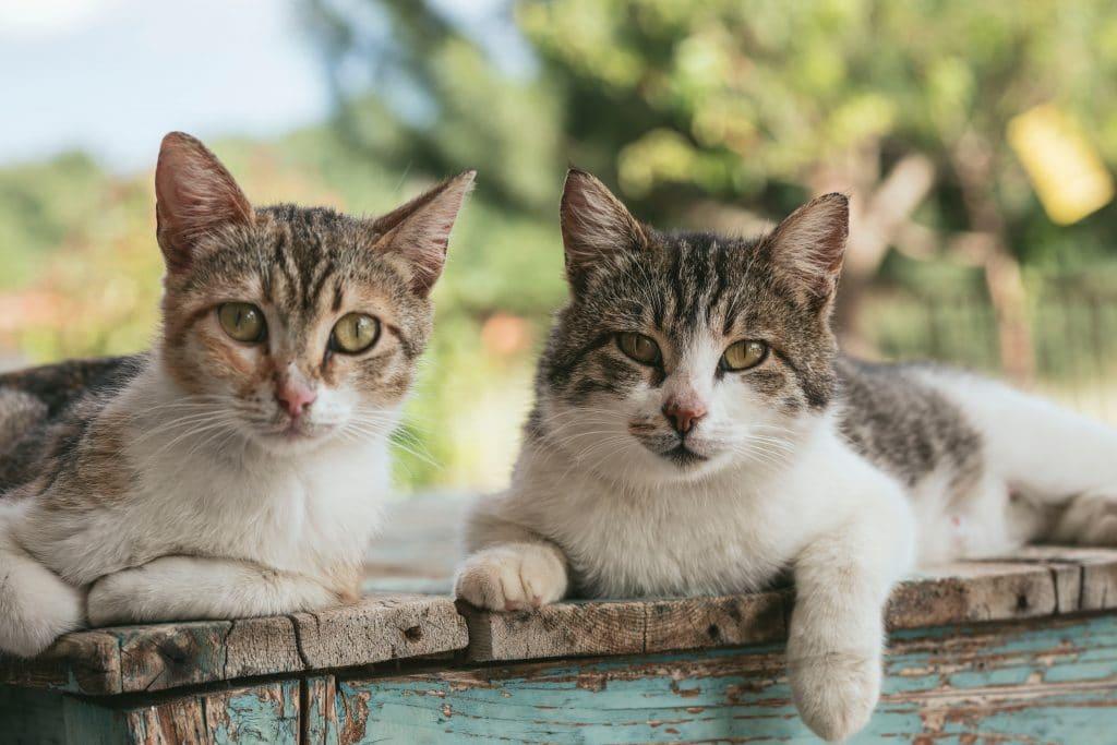 Katzen von Chalkidiki